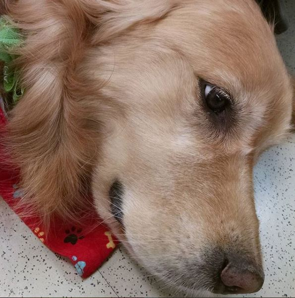 Students loved the comfort dogs who visited PR several times this year.